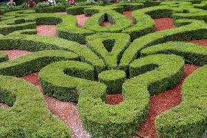 Complex Maze Pattern